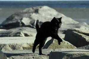 una gatta che mi segue