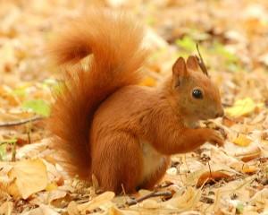 uno scoiattolo vicino